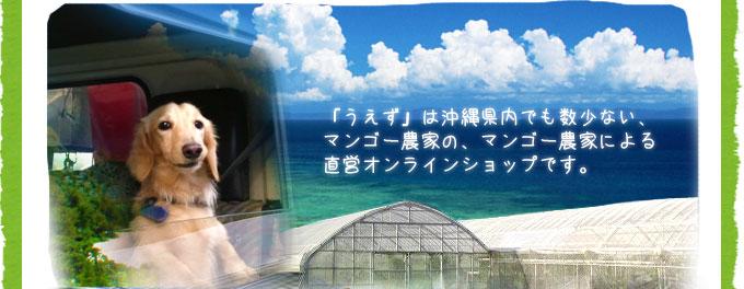「うえず」は沖縄県内でも数少ない、マンゴー農家の、マンゴー農家による直営オンラインショップです。