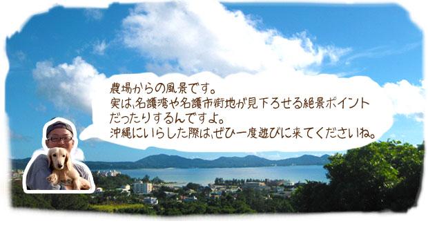 農場からの風景です。実は、名護湾や名護市街地が見下ろせる絶景ポイントだったりするんですよ。沖縄にいらした際は、ぜひ一度遊びに来てくださいね。