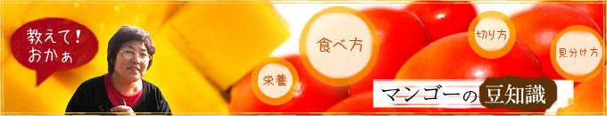 マンゴーの豆知識